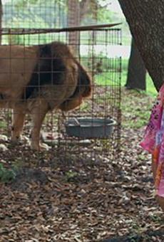 San Antonio native Carole Baskin talks animal activism, presidential pardons and zombie tigers