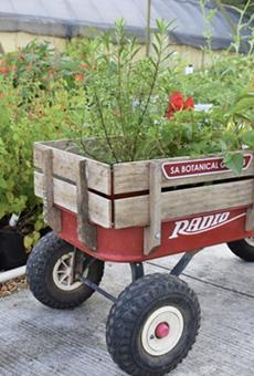 San Antonio Botanical Garden's Bootanica Plant Sale will take place Oct. 23-24.