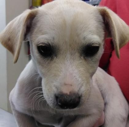 Love is in the air! Let's go to Paris - SAN ANTONIO HUMANE SOCIETY