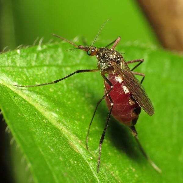 More Zika virus cases could emerge in Bexar County. - VIA FLICKR CREATIVE COMMONS/KATJA SCHULZ