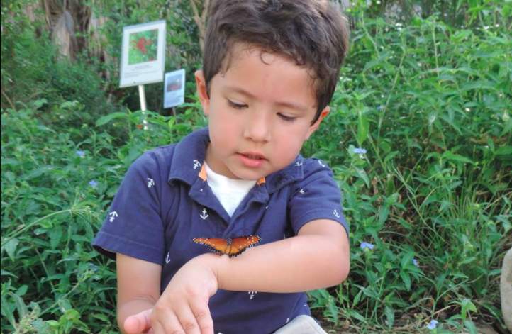 Boy meets a butterfly at Santa Ana National Wildlife Refuge. - U.S. FISH AND WILDLIFE SERVICE / CRISTINA DE LA GARZA