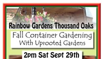 Fall Container Gardening with Uprooted Gardens