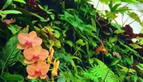 Aquaponics Greenhouse Grand Opening