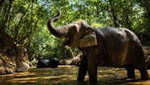 San Antonio Zoo Pretends to Take Elephants To Brackenridge Park as April Fools' Day Prank