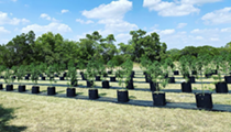 Texas' First Legal Cannabis Hemp Farm is Just Up the Road From San Antonio Near Boerne