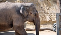 San Antonio Zoo's Tim Morrow Addresses Lucky The Elephant Controversy
