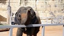 Animal Rights Group Sues San Antonio Zoo