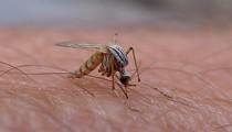 2 More Zika Virus Cases Confirmed in Bexar County