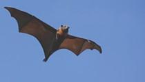 Get Batty