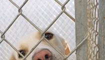 With Strings Attached, City Council Backs $375,000 Bailout for San Antonio Pets Alive