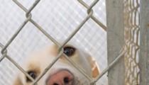 San Antonio Animal Care Services' Live Release Rate Falls Below No-kill Standard