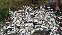 Stormwater Runoff Killed More Than 12,000 Fish At Espada Park