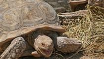150-pound Pet Tortoise Starts House Fire on City's Northwest Side