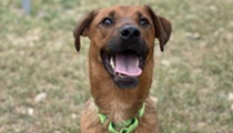 Dog adoptions increased in San Antonio during the pandemic, following U.S. trend