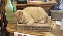 Resident feline at San Antonio's Rainbow Gardens featured by viral Bodega Cats social media account