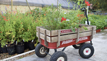 San Antonio Botanical Garden to hold last Greenhouse Yard Plant Sale of the year on Oct. 23-24