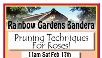 Pruning Techniques For Roses