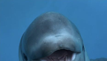 Baby Beluga Whale is Moving to SeaWorld San Antonio
