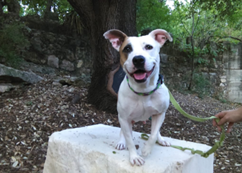 It's National Puppy Day! Here's How to Adopt a Shelter Dog in San Antonio