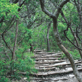 San Antonio's (Not So) Secret Gardens: The Best Places to Get Your Wilderness Fix