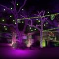 Lions, Tigers and Lights: Zoo Lights Takes Over San Antonio Zoo Through Holiday Season