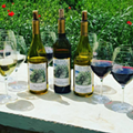 Is Texas Wine Any Good Yet? Millennials Could Help the Push