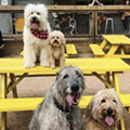 Dog Park Bars and Restaurants On The Rise in Texas, But Not Yet In San Antonio