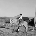 SaddleUp Exhibit Gives San Antonians a Glimpse Into Ranching Lifestyle