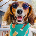 These San Antonio Businesses are Throwing Pet Parties Wednesday to Celebrate National Dog Day