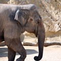 San Antonio Zoo's Tim Morrow Addresses Lucky The Elephant Controversy