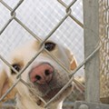 San Antonio Animal Care Services' Live Release Rate Falls Below No-kill Standard