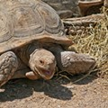 150-pound Pet Tortoise Starts House Fire on City's Northwest Side