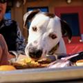 San Antonio's Bar-B-Cutie SmokeHouse holding 'Barks and Brews' event Sunday