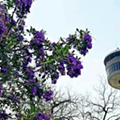 San Antonio's Tower of the Americas to host third annual Wine Fest next month