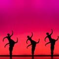 Acrobatic Dance Troupe Momix Conjures Surreal Desert Vistas with 'Opus Cactus'