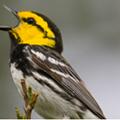 Texas Sues to Kick Bird Off Endangered Species List