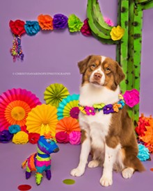 388b5247_fiesta_party_dog_photo.jpg