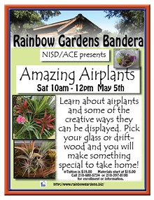 df9e8f33_nisdamazing_airplants_2018.jpg