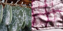cochineal_.jpg