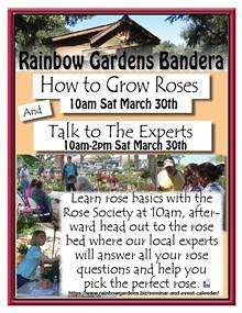 how_to_grow_roses_.jpg