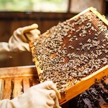 bees_knees_.jpg