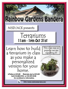 37bb57b9_terrariums_bandera_october.jpg