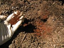 soil-amendment-actino-iron.jpg