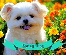 466391c4_spring_fling_360x300.jpg