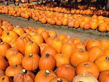 ba996ec0_bracken-pumpkin-patch-2.jpg