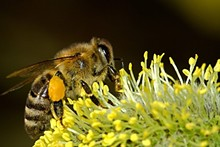 3fdc4f3c_bees-18192_1280.jpg