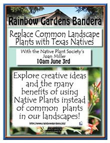 b8924ed9_native_plants_bandera_2017.jpg