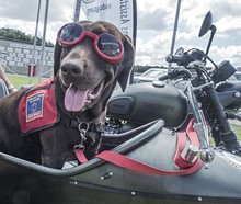 21d2197e_dog_in_motocycle_2.jpg