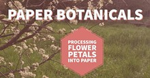 175b6acd_paper_botanicals.jpg