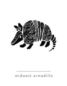 midwest-armadillo-386x500.jpg
